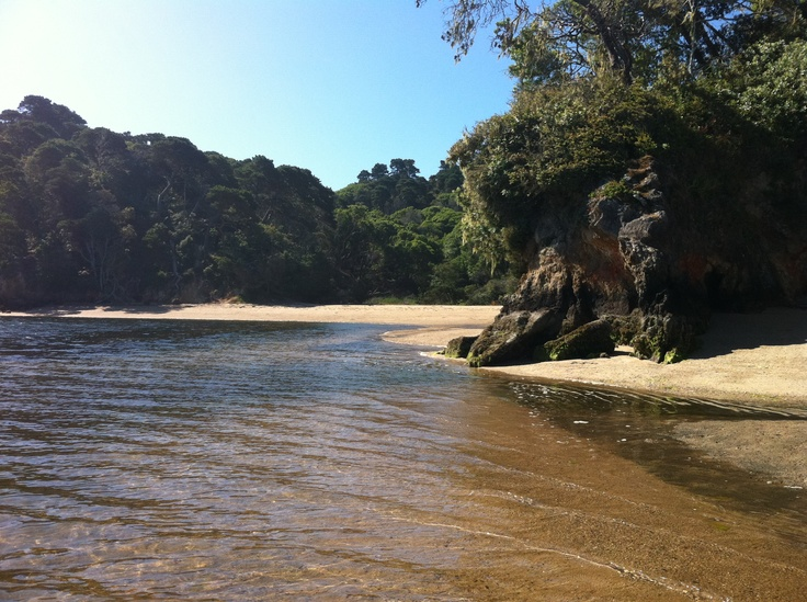 Beach cove with clear and calm water surrounded by trees