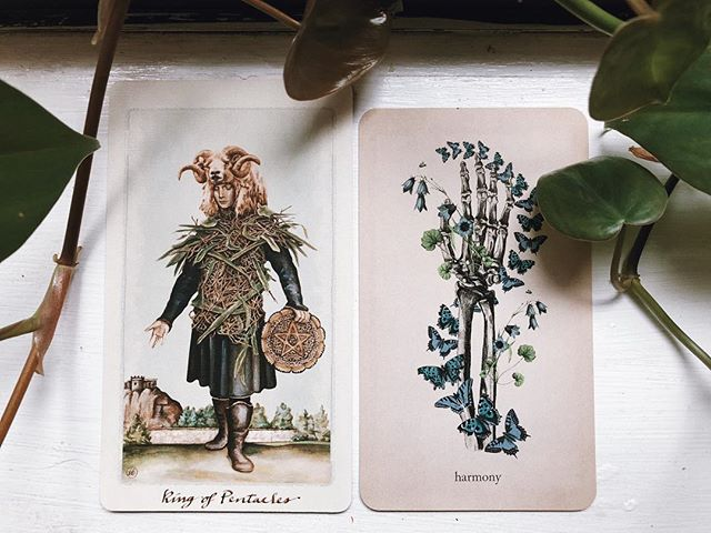 This month's cards are he King of Pentacles and Harmony. Want to know what medicine they're offering as we move through August? Sign up for the Patreon! For only $3 a month you get not only these monthly tarot forecasts but also monthly writings about all kinds of topics. Sign up at the link in my bio. . . . . . #witchesofinstagram #patreon #tarotreadersofinstagram #magiceverydamnday #witch #witches #witchcraft #tarot #tarotcards #tarotreader #tarotreading #oraclecards #witchy #witchywoman #witchythings #hedgewitch #hedgewitchesofinstagram #alifeofintention