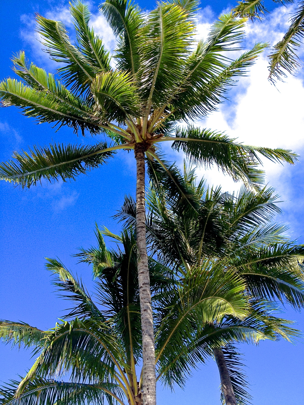 The palms be our minds, the clouds be our thoughts~Wave your pretty palms at the passerby's of clouds.