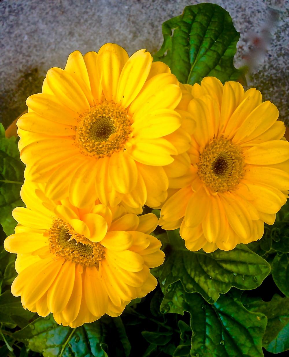 Yellow Threes~