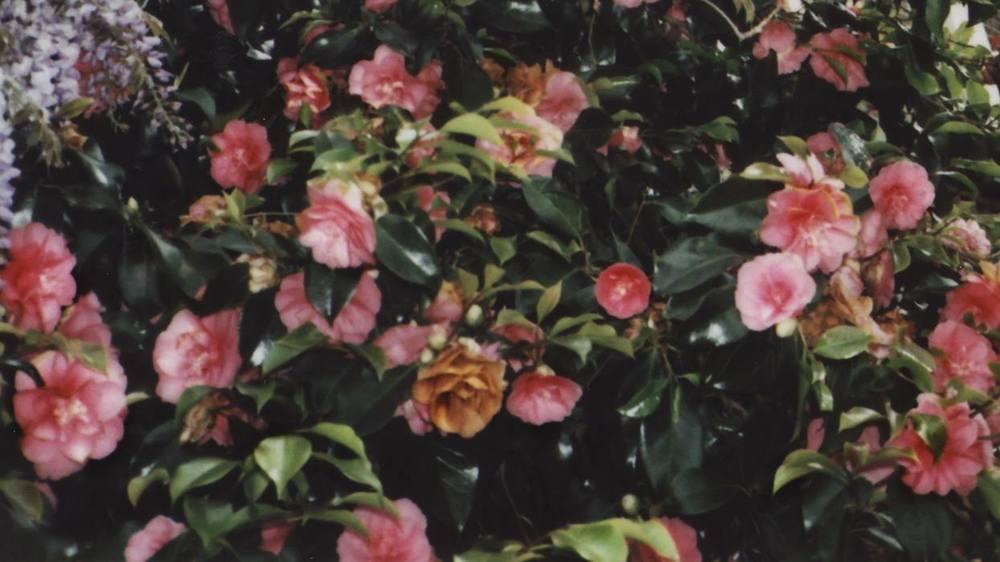 litabosch_flowerwallpaper.jpeg