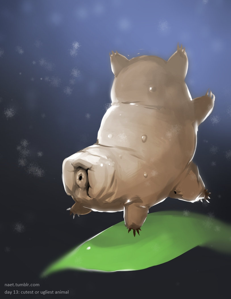 Day 13: The tiny  waterbear , also known as a moss piglet!