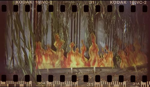 The creation of fire -- by Joe Reifer