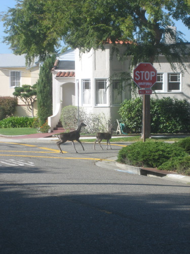 Deer crossing -- by Jen English