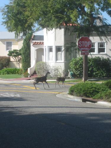 Deer crossing -- by Jen English
