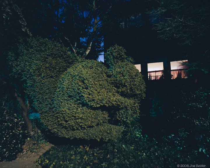 Berkeley Squirrel Topiary at Night -- by Joe Reifer