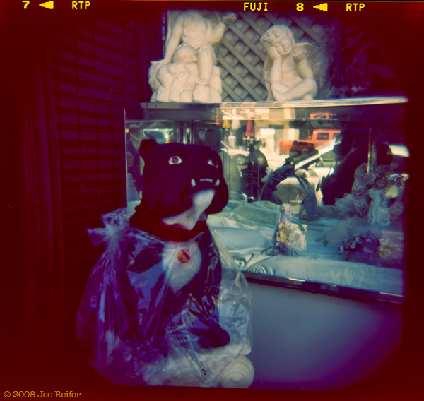 Holga: Dog In Plastic #8