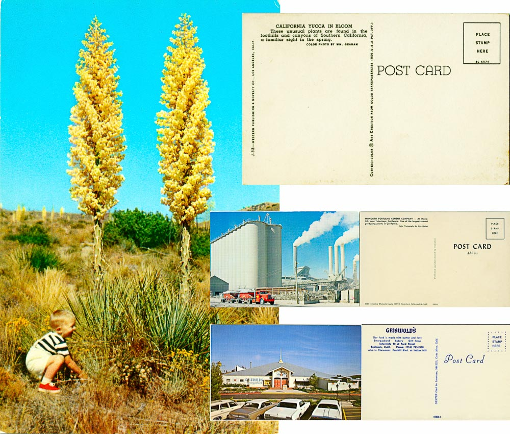 Postcards from the desert -- by Joe Reifer