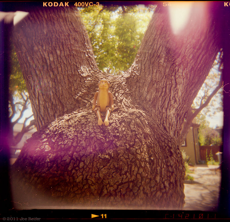 Holga: Monkey in a tree -- by Joe Reifer