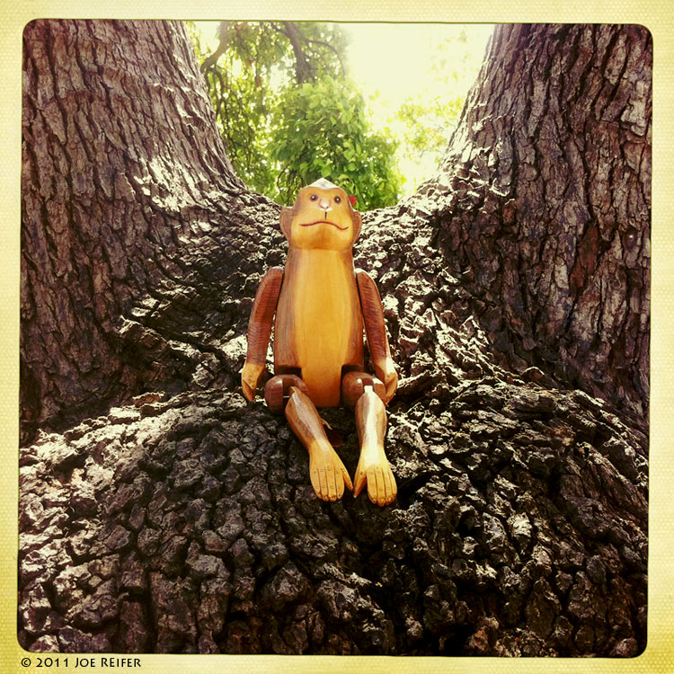 Hipstamatic: Monkey in a tree -- by Joe Reifer
