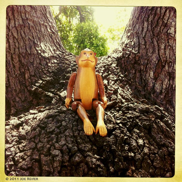 Hipstamatic: Monkey in a tree -- by Joe Reifer