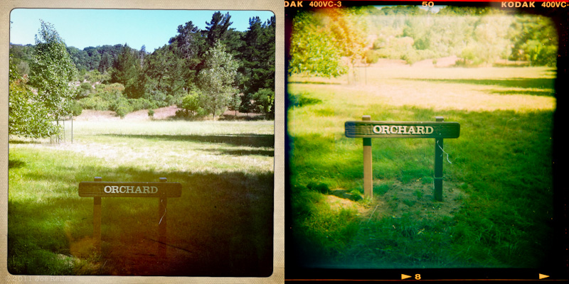 Holga vs Hipstamatic: Orchard -- by Joe Reifer