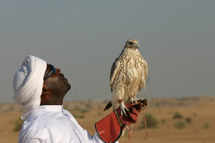 Falconing_in_Dubai_by_NicolasCameron4w.jpg