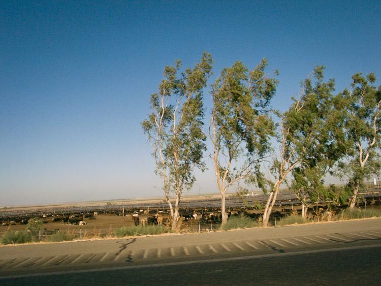 desert_20100926_055w.jpg