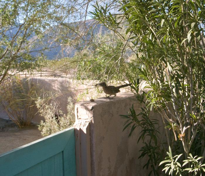 palmsprings_20081230_45w.jpg