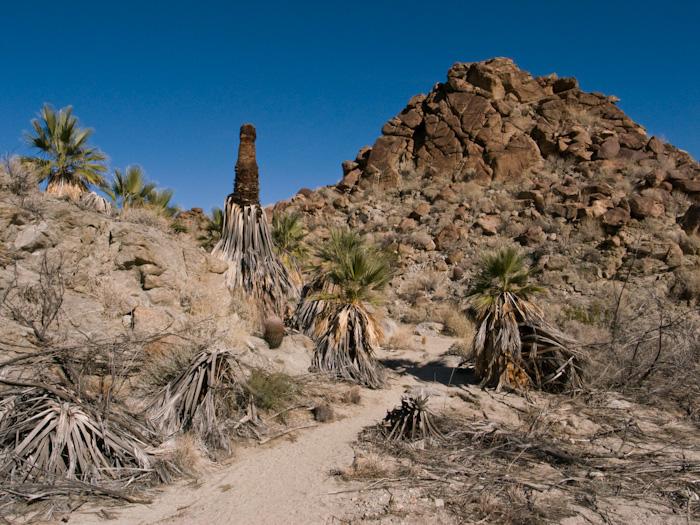 palmsprings_20081228_46w.jpg