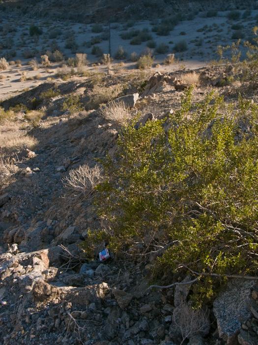 palmsprings_20081228_83w.jpg