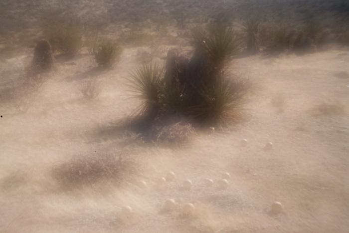 palmsprings_20081229_50w.jpg