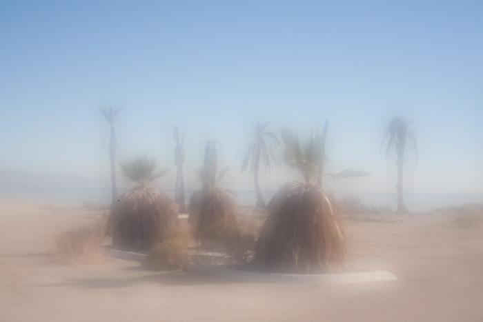 palmsprings_20081230_06w.jpg