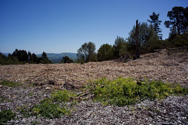 hike_20090404_05w.jpg