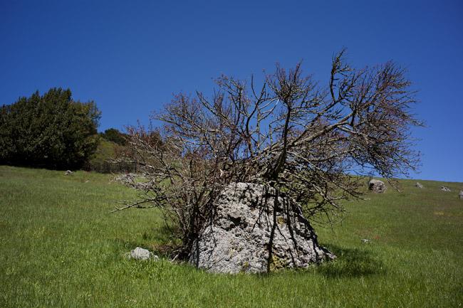 hike_20090404_08w.jpg
