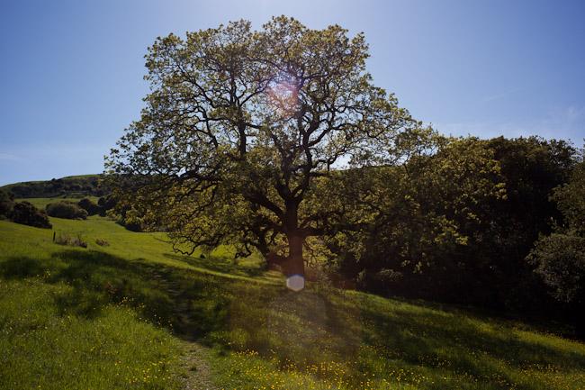 hike_20090404_32w.jpg