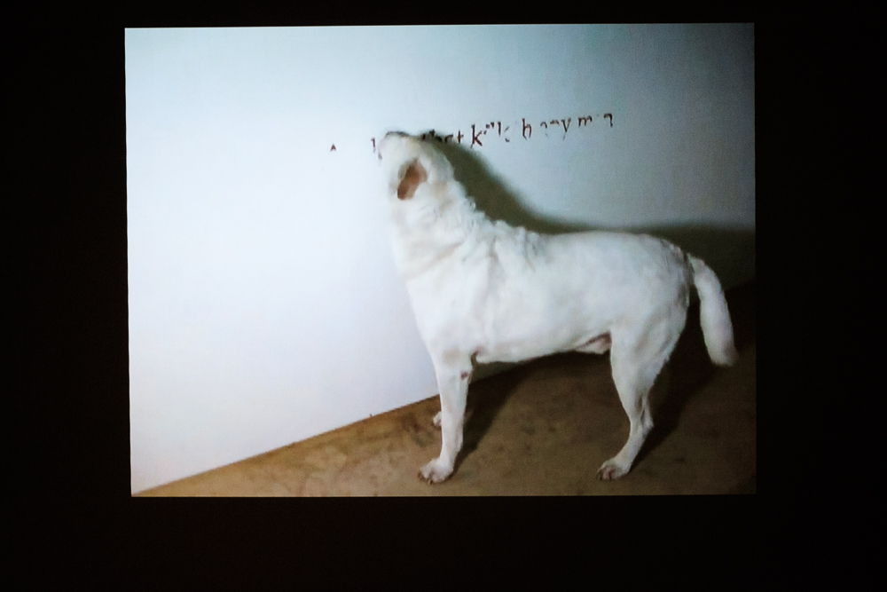 A dog licked a wall to write ancient religious texts.