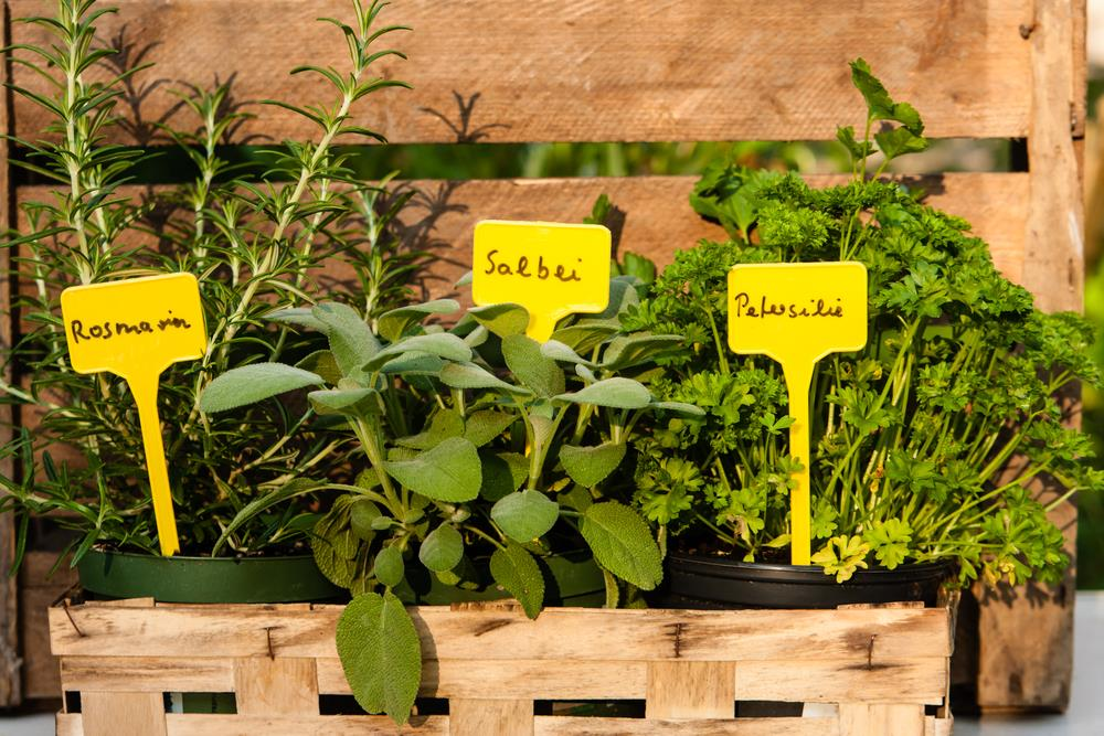 Caption: Herbs are excellent starter plants for those starting their food garden.