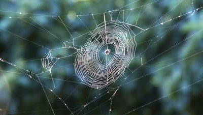 stock-footage-spider-web-wavers-in-wind-as-flies-buzz-about