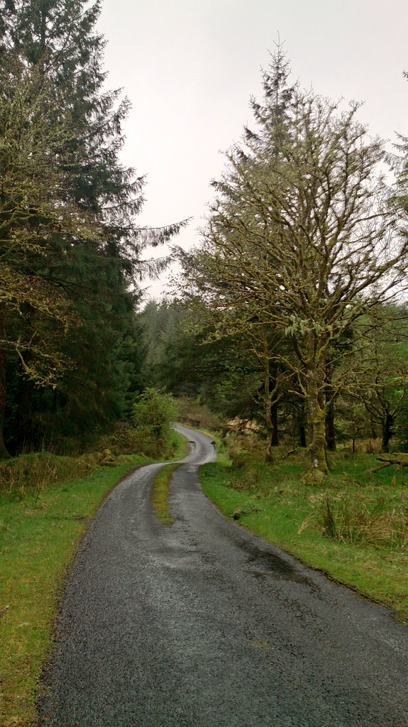 I wish I had taken more photos in this forest, as these don't do it justice for how scary and challenging this place was on this particular day, but it was too damp to manage. Many winding, fast exciting roads like this one in the hail made it an extreme sport.