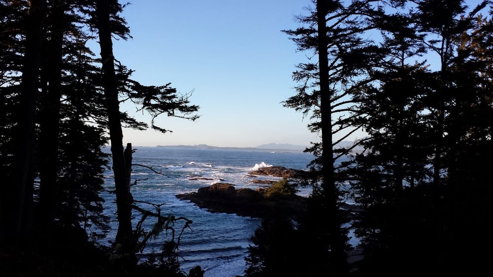 Hiking in Tofino's wild coastal forests, December 2014.