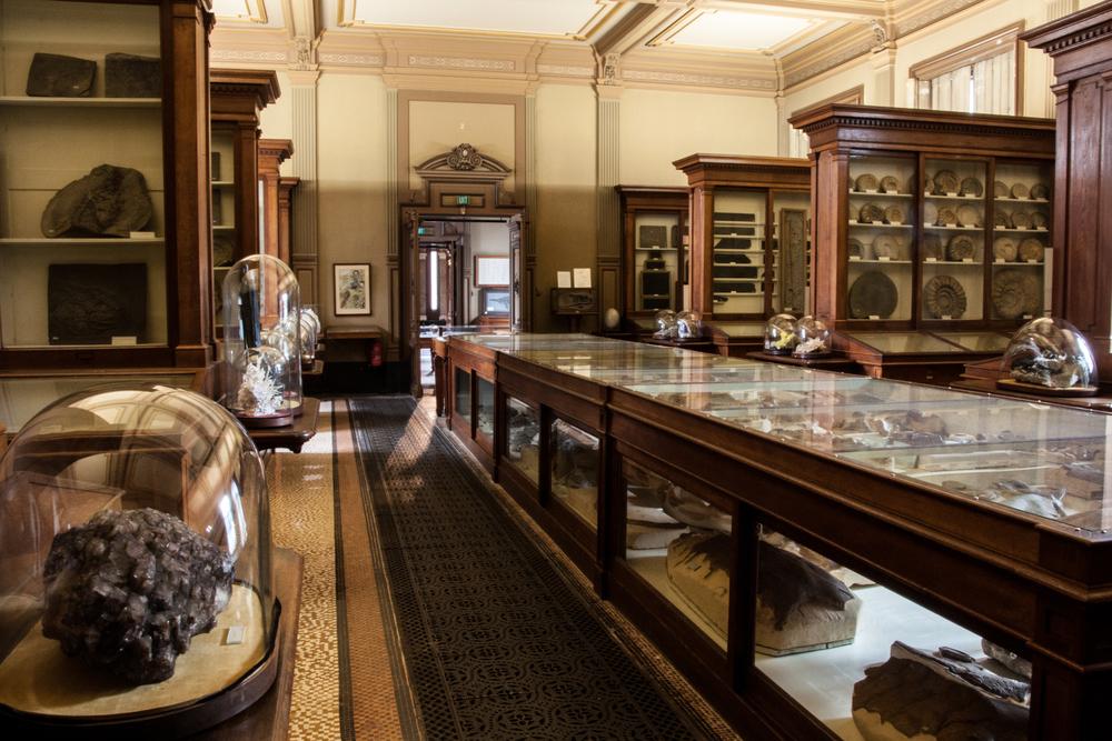 Teylers Museum Fossil Room II