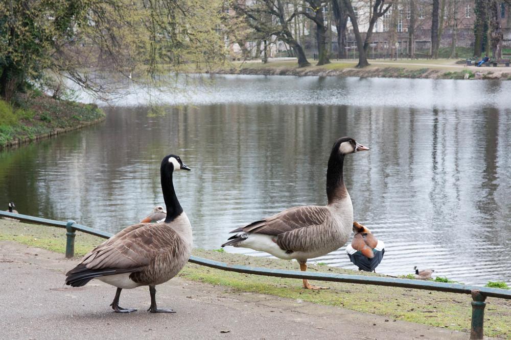 Dusseldorf parks
