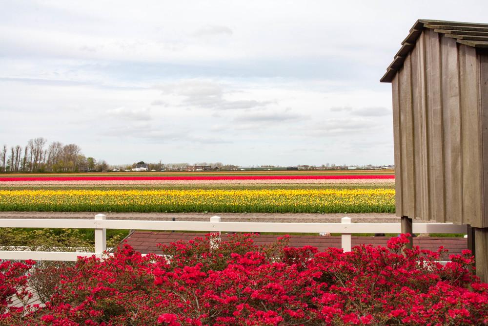 Keukenhof tulip fields