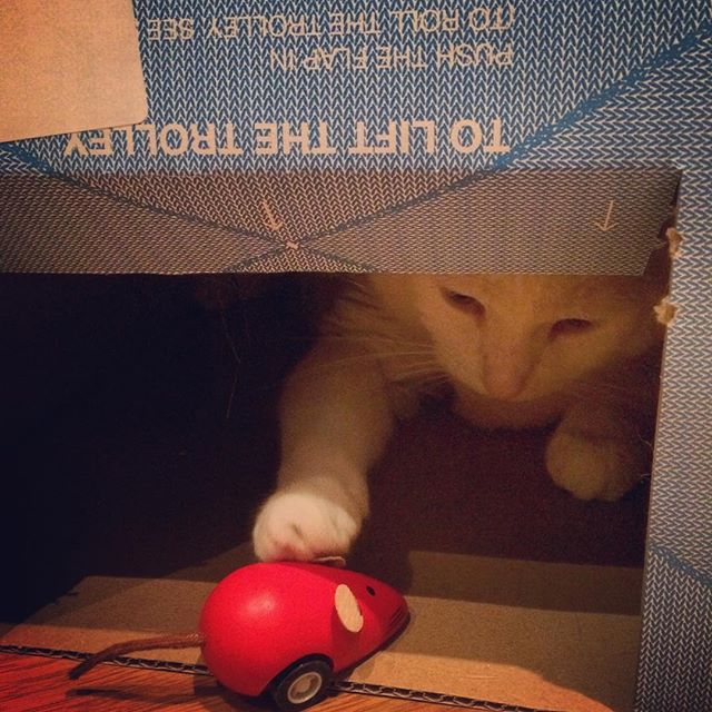boxes are the gifts that keep on giving #nougattitude #boxes #catsandboxes #xmas #catandmouse #instacat