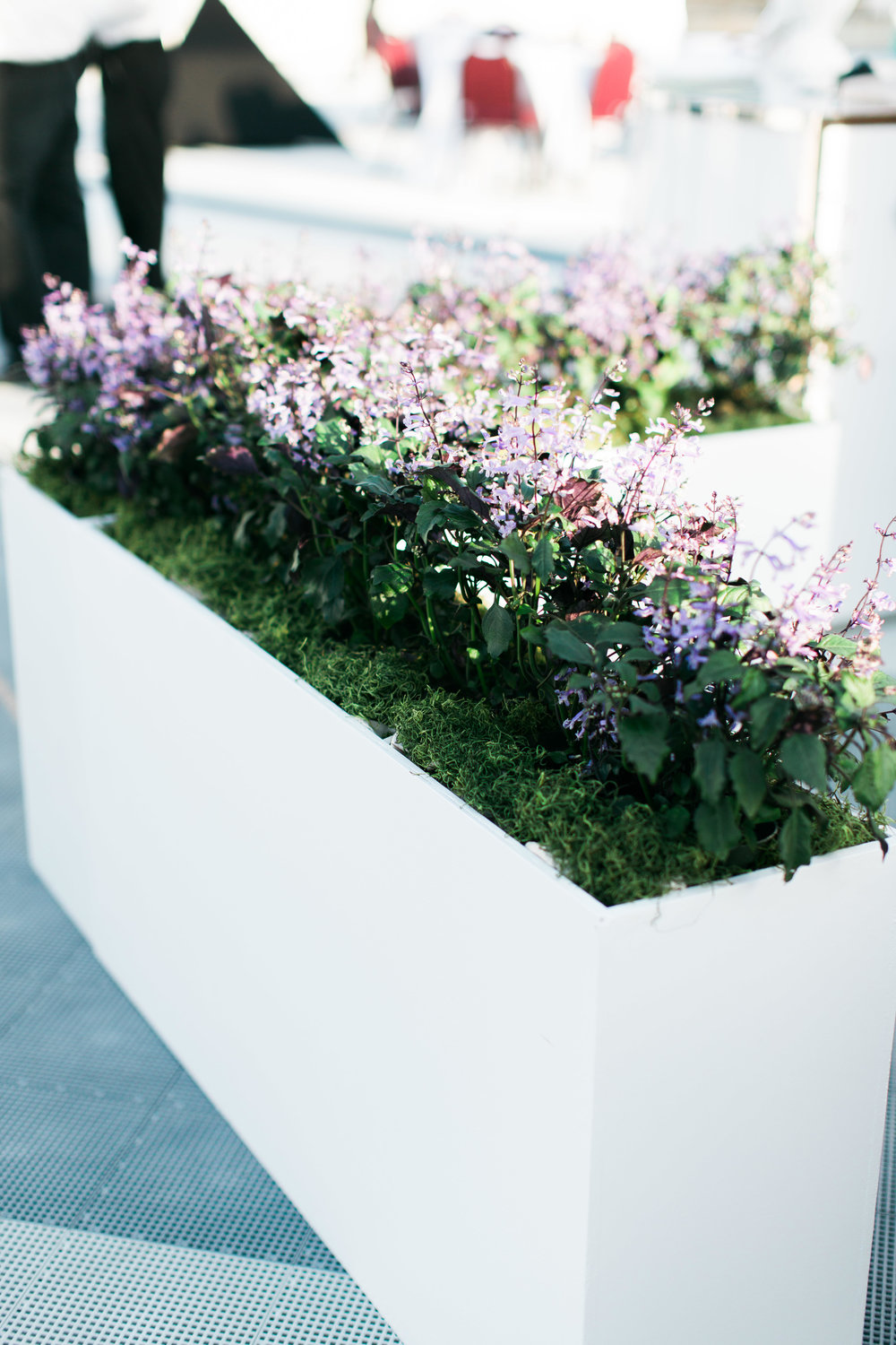 Curate-HFWF-Uncorked-Lavender-Planter.jpg