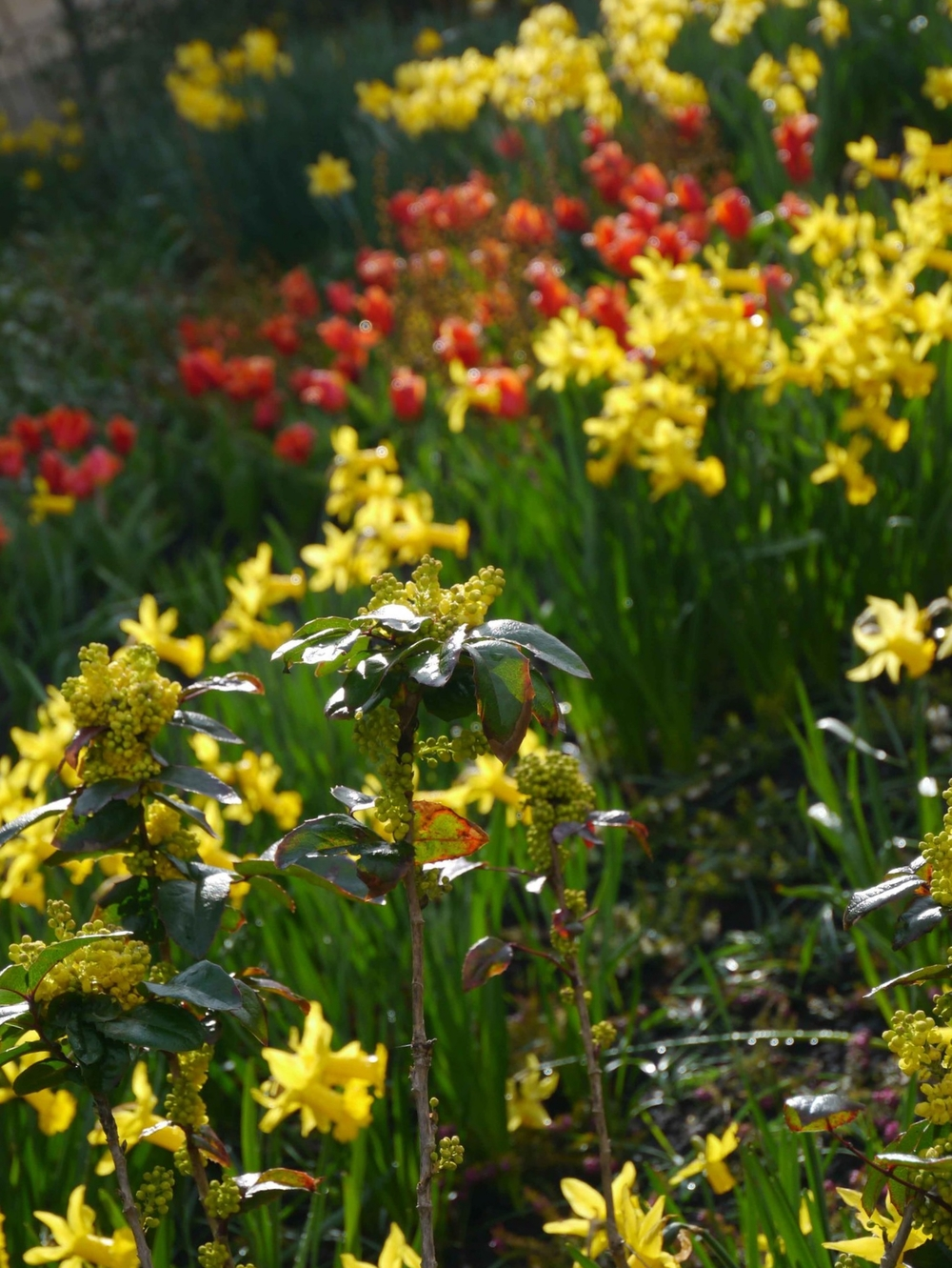york musuem gardens 3.jpg