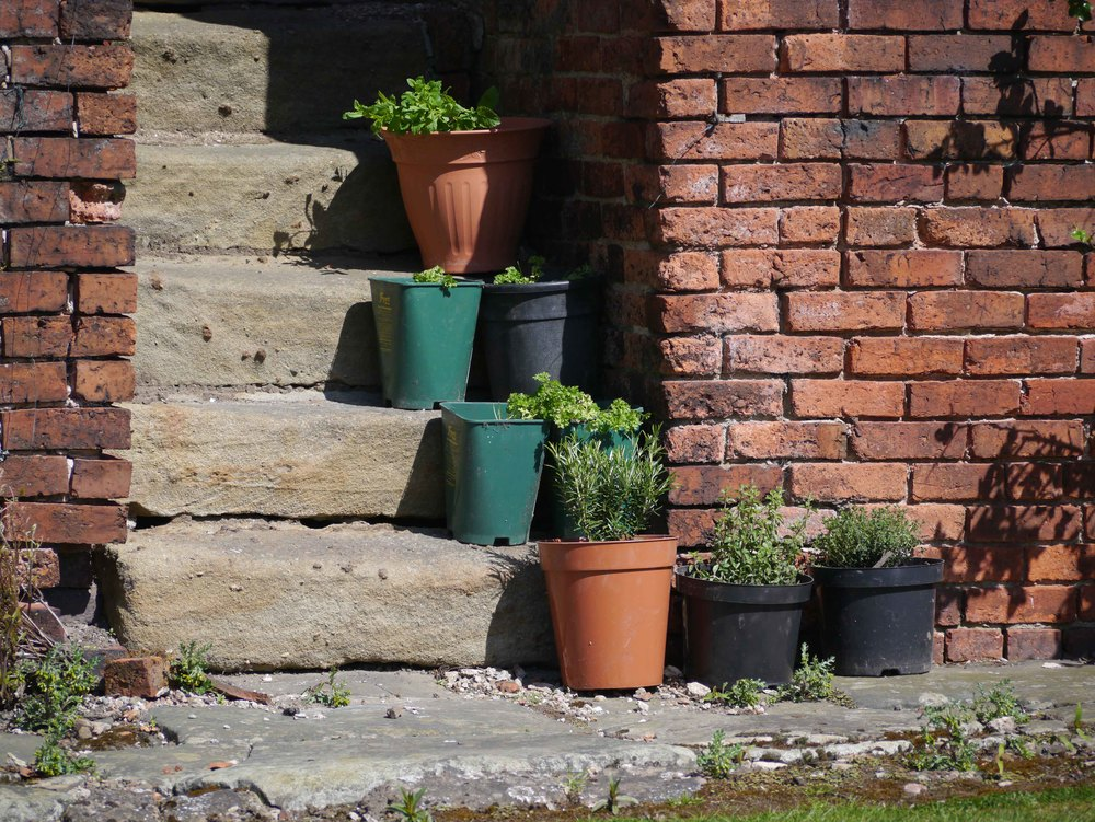 herbs in pots.jpg