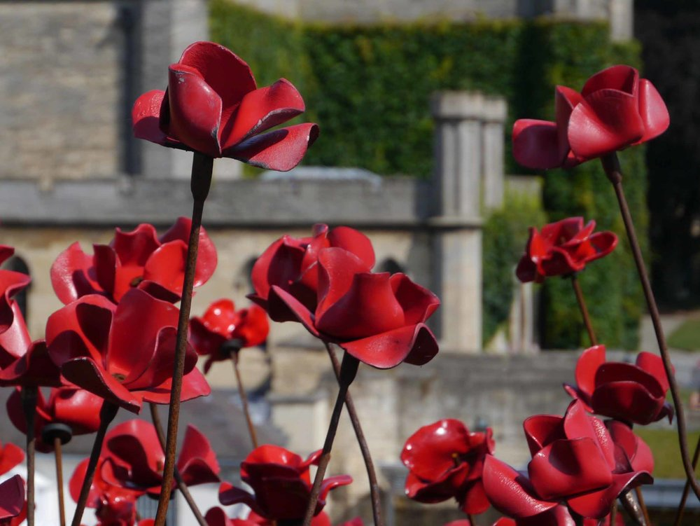 Lincoln Castle Poppies