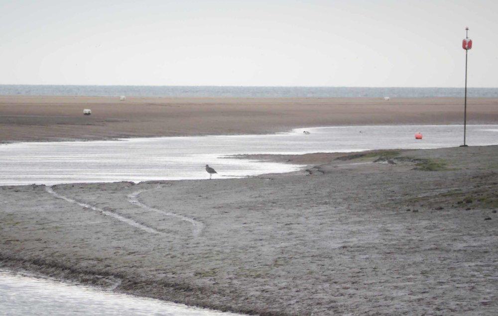 Saltfleet Haven-1.jpg