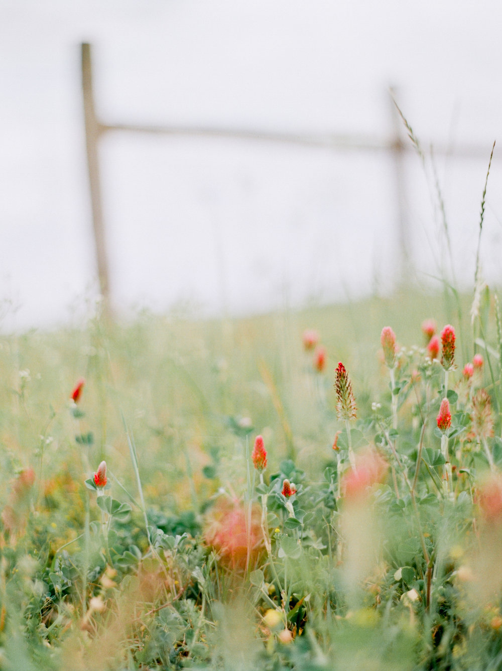wildflower-field