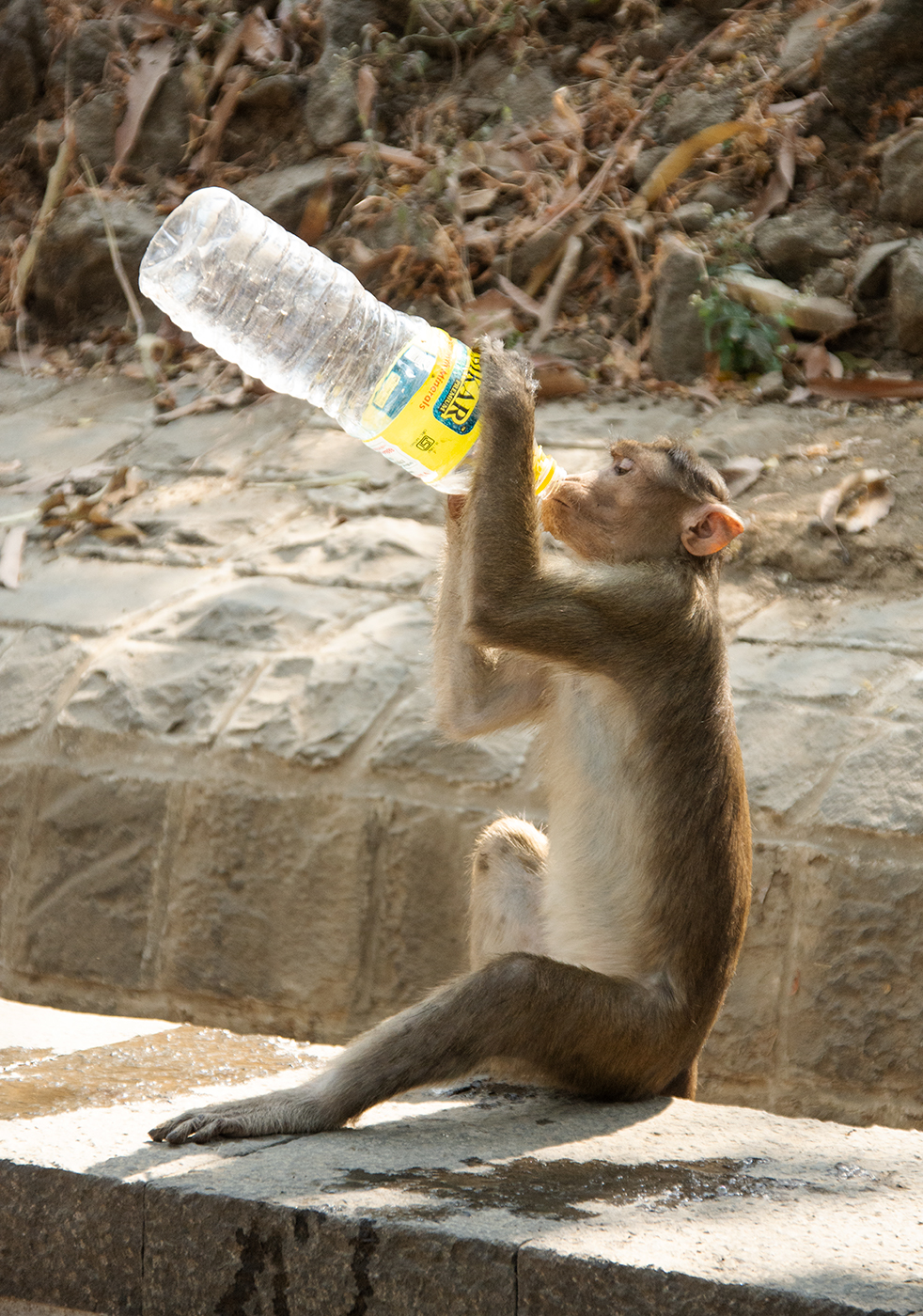 Monkey_WaterBottle_web2019.jpg