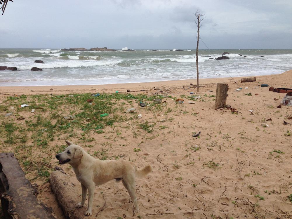 Stray dog and beach trash
