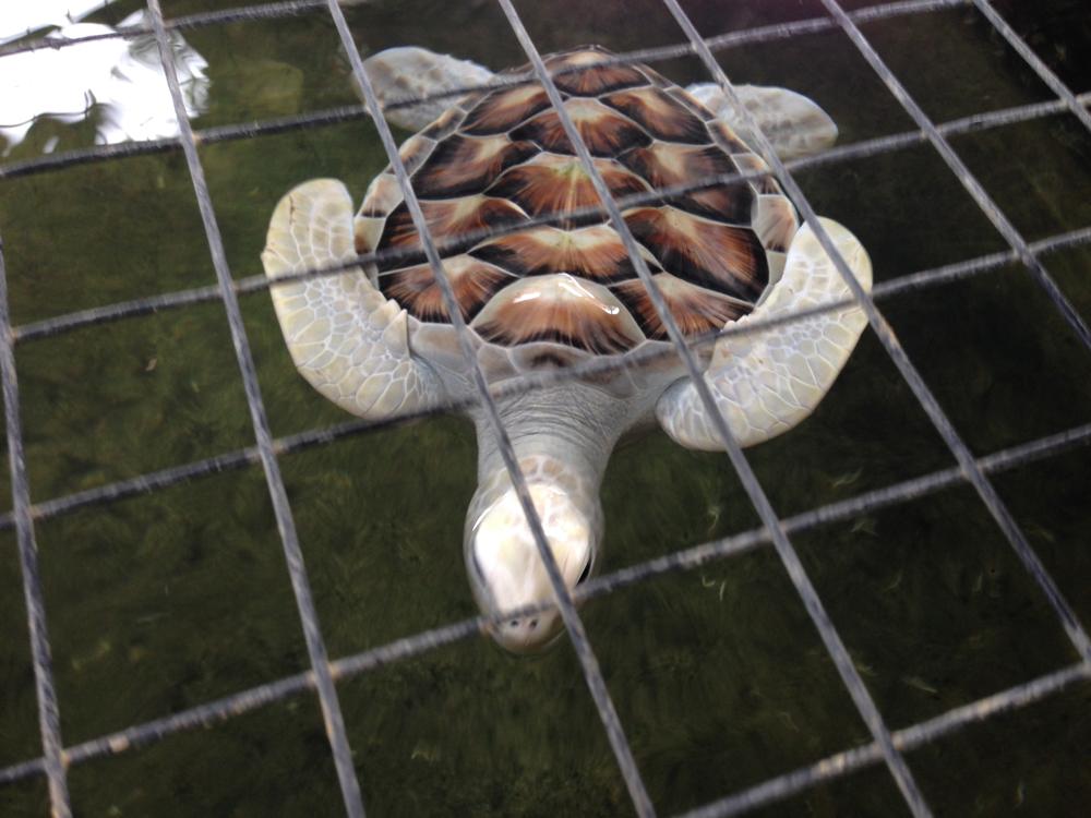 Our famous Albino turtle, who I call Casper.