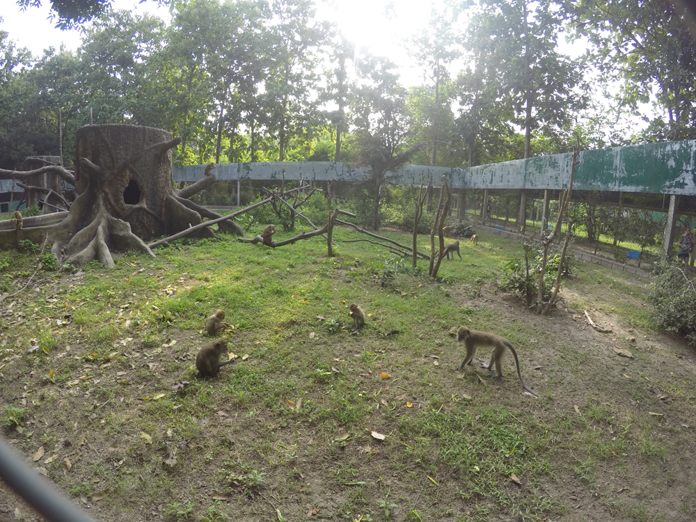 Many, many macaques