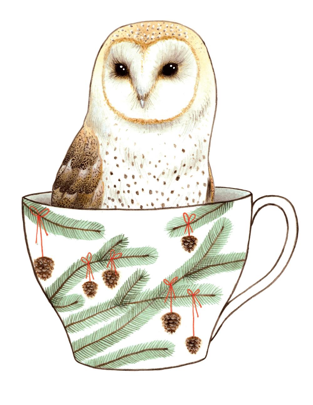 Barn Owl in a Teacup II