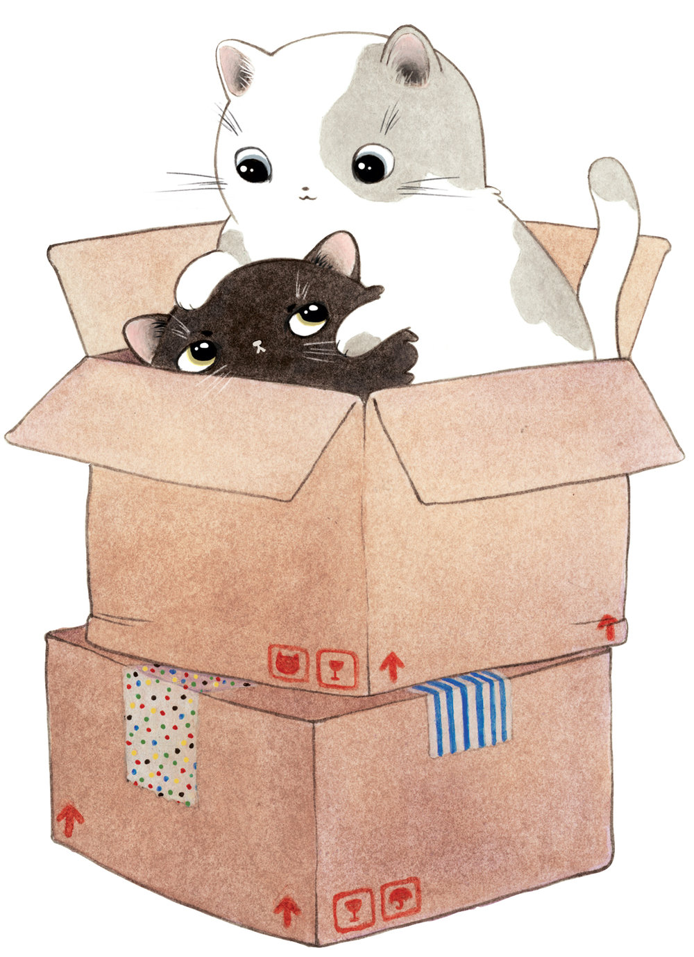 cats-in-box.jpg