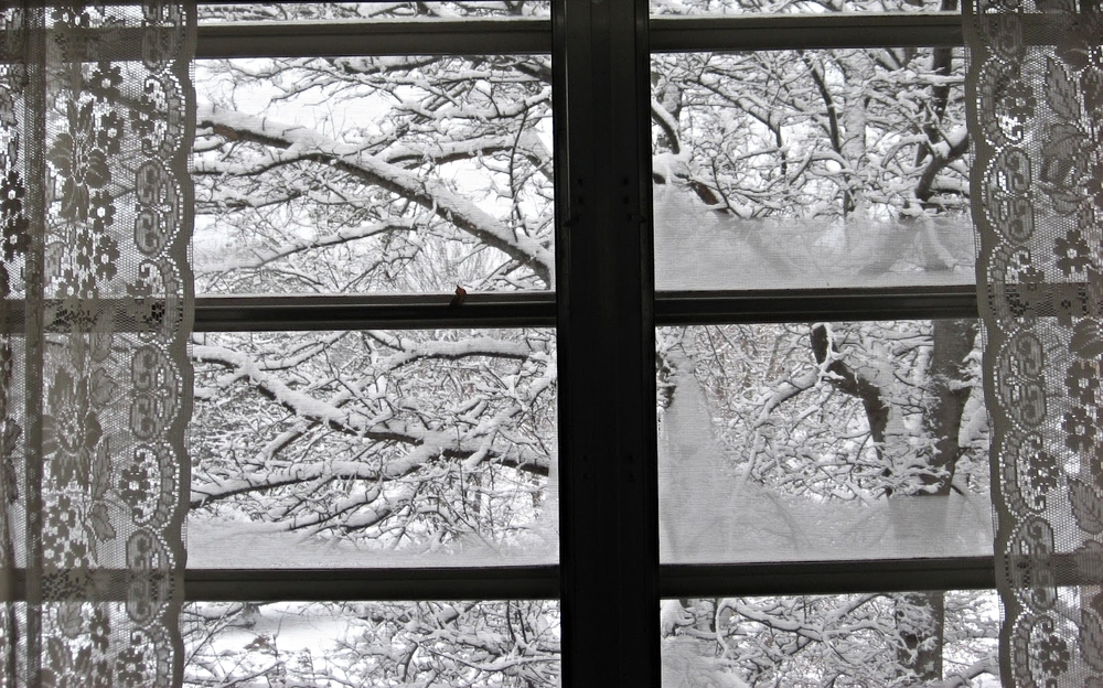 snowysycamore.jpf