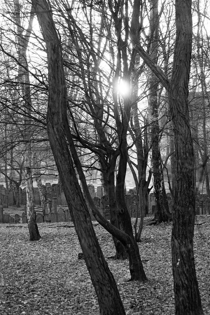 Der jüdische Friedhof Altona  ist 1,9 Hektar groß. Rund 7600 Grabsteine sind erhalten. Der Friedhof gehört deshalbzu den bedeutendsten jüdischen Grabfeldern und steht unter Denkmalschutz. Er wurde 1611 von portugiesischen Juden angelegt und 1869 geschlossen. Es gibt einen sephardischen Teil, den Portugiesenfriedhof und einen aschkenasischen.  Die Friedhofsanlage soll als Weltkulturerbe der UNESCO nominiert werden.  Umgeben von 2 stark befahrenen Straßen, ist dieser Ort eine Oase der Stille und der Kontemplation, Demut und Verzauberung.