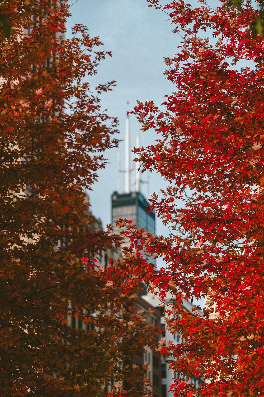 Millennium-Park-Fall-2018-0100.jpg